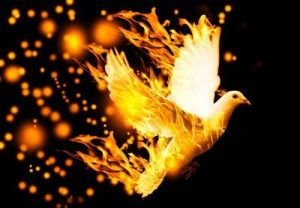 dove in fire
